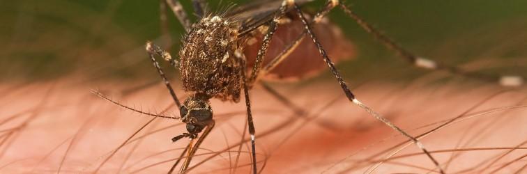 Szúnyog csípés elleni szerek, szúnyog riasztó
